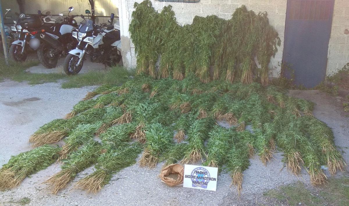 Εξώδικο για την εκρίζωση 10.586 φυτών κάνναβης! (Διαβάστε την εξώδικη δήλωση)