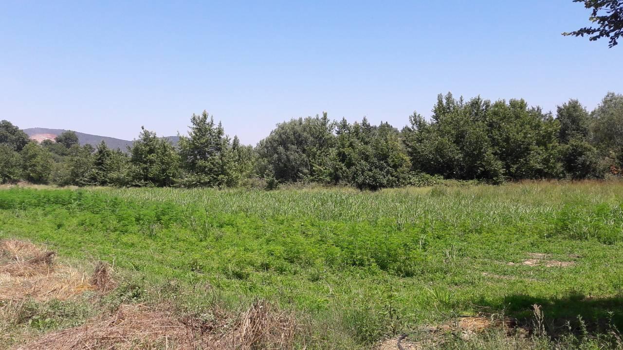 φυτεία Καρδίτσα1