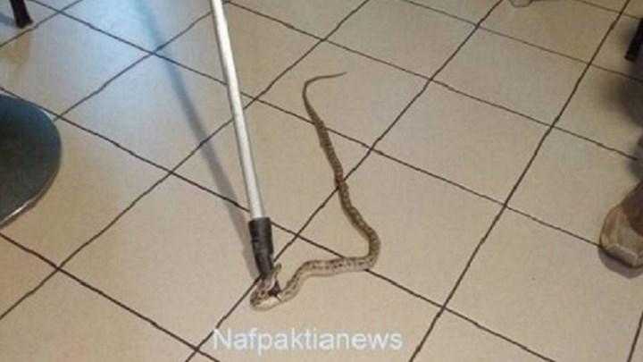 Φίδι «έκοβε βόλτες» μέσα σε καφετέρια