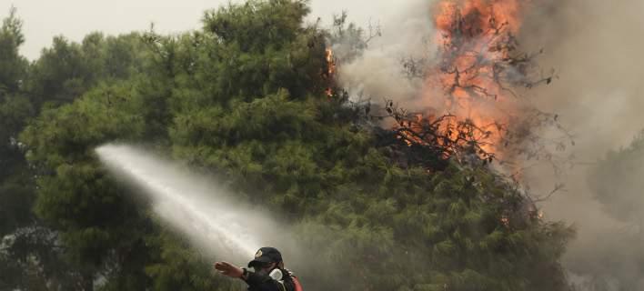 Πυρκαγιά σε δασική περιοχή του Ρεθύμνου