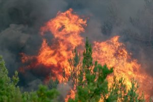 Αναστάτωση από πυρκαγιά