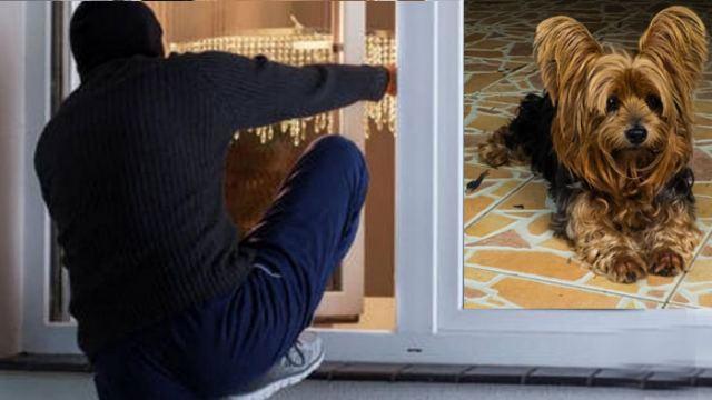 Στυλίδα: Το σκυλάκι «έδωσε» τους κλέφτες!