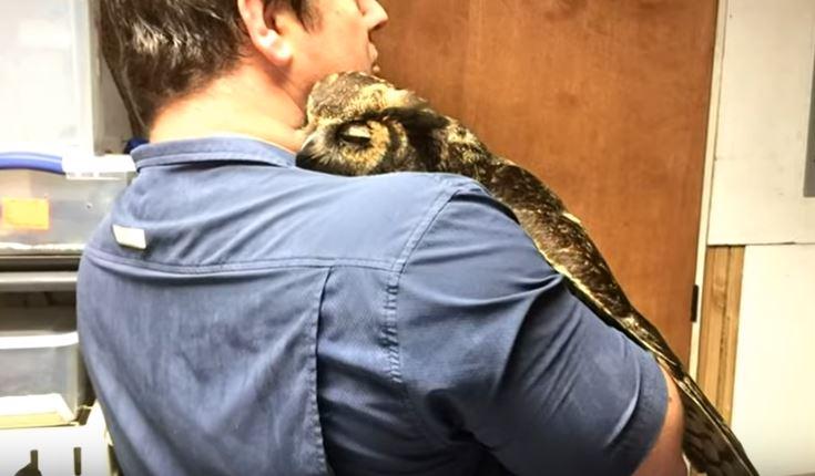 Κουκουβάγια δε σταματά να αγκαλιάζει τον άνδρα που την έσωσε