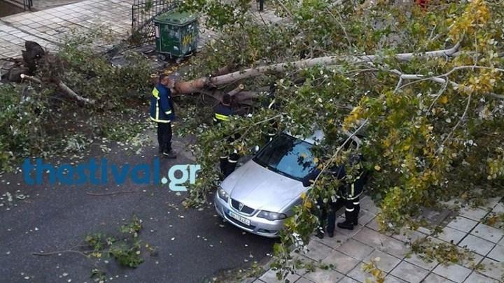 Πτώσεις δέντρων από την έντονη βροχόπτωση στη Θεσσαλονίκη