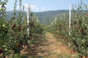 Συνεργασία ΕΛΓΑ, Δήμου Ζαγοράς – Μουρεσίου και ΖΑΓΟΡΙΝ για προστασία καλλιεργειών