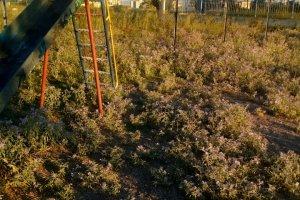 Ακαθάριστα τα πάρκα της συνοικίας Τούμπας