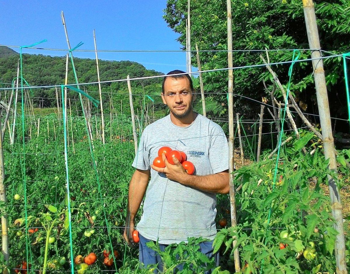 Ντομάτα με γεύση… ντομάτας – Του Άγγελου Πετρουλάκη