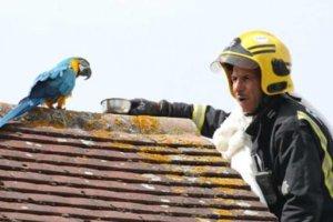 Πυροσβέστες πήγαν να σώσουν παπαγάλο και εκείνος… τους έβρισε στα ελληνικά !
