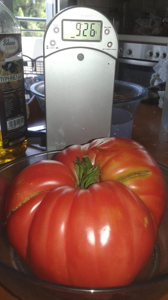 Ντομάτα-γίγας, ενός κιλού έβγαλε καλλιεργητής από την κήπο του