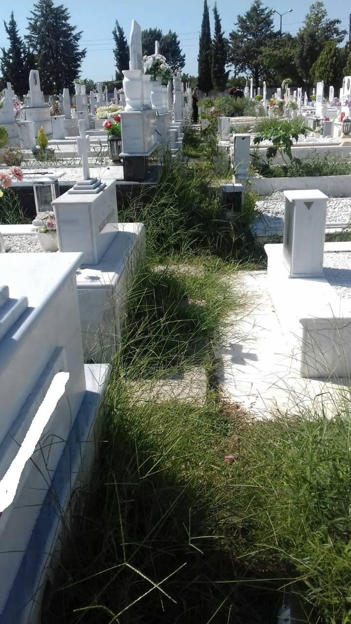 χορτα νεο κοιμητηριο λαρισας (7)
