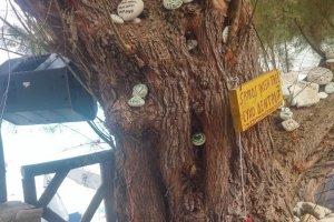 Αντίπαξοι: Μαγεύει τους τουρίστες το «δέντρο των ευχών»