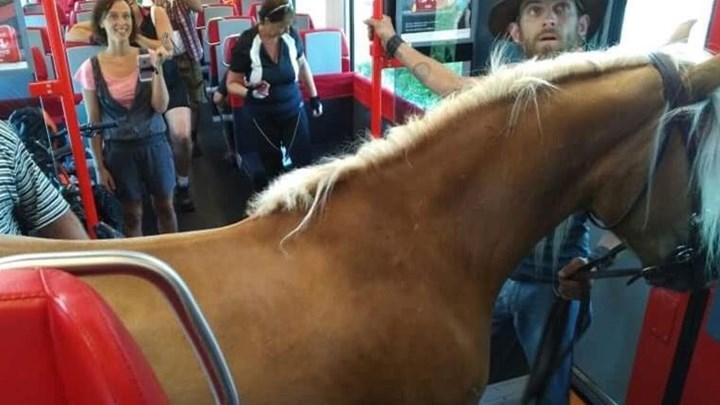 Επιβιβάστηκε στο τρένο μαζί με το… άλογο