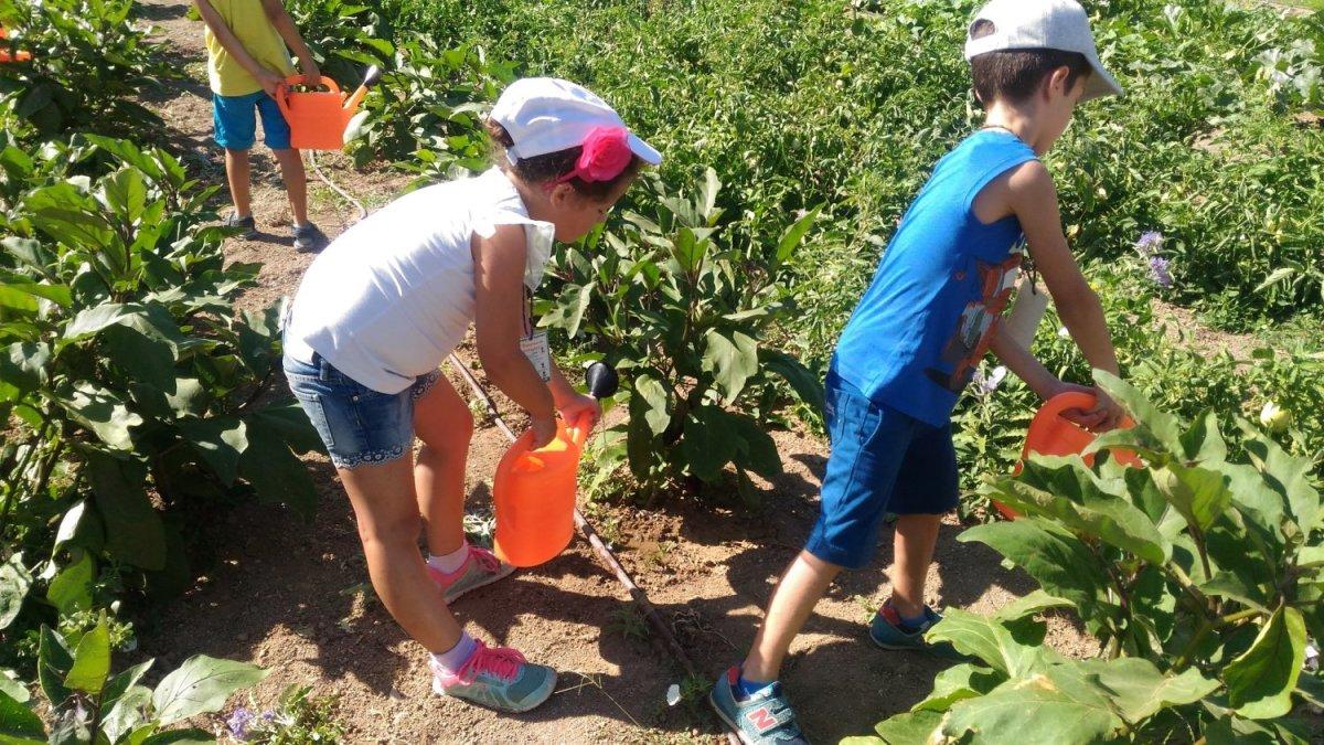 Τελευταία περίοδος για το εκπαιδευτικό πρόγραμμα «Καλοκαίρι στο Αγρόκτημα»