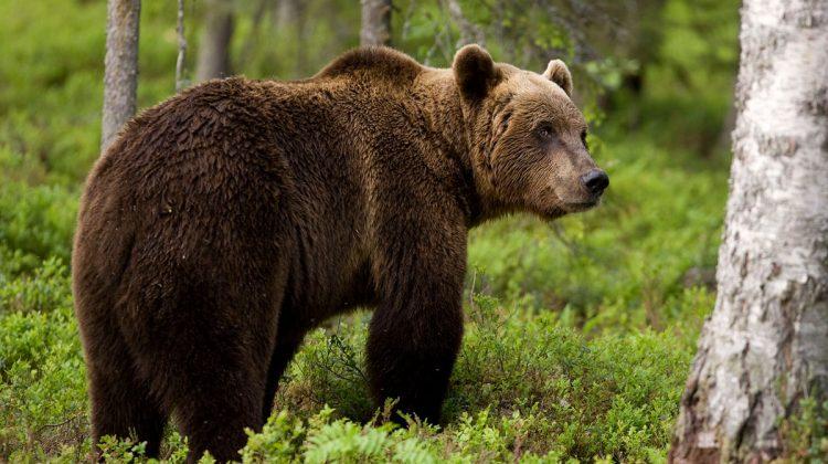 Αρκούδα έφτασε σε μαντρί στο Ξυλοπάροικο Τρικάλων