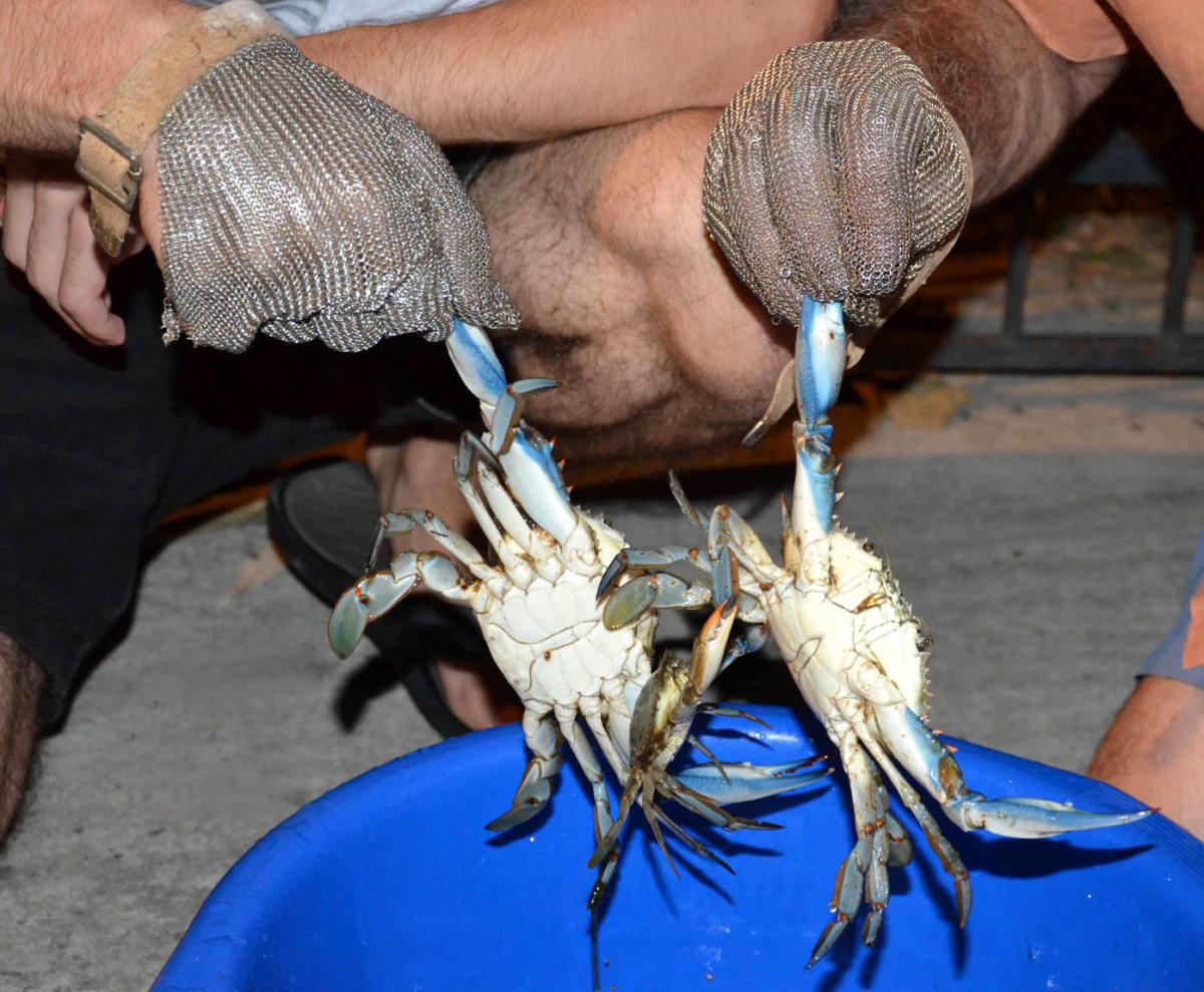 Ψαρεύοντας μπλε καβούρια στο Στόμιο (φωτ.)