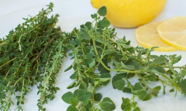 Καρκίνος του παχέος εντέρου: Το ελληνικό βότανο που κάνει… θαύματα!