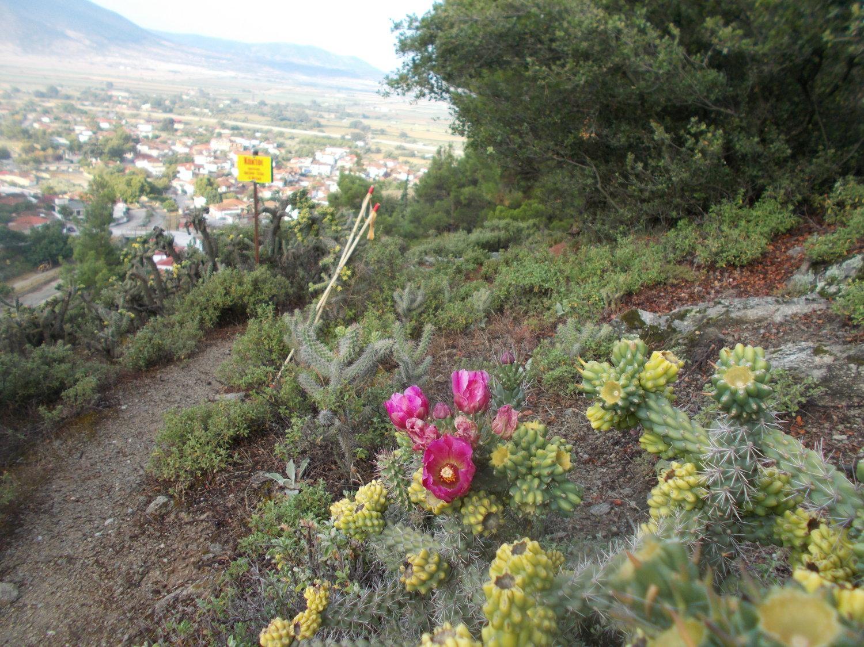ορειβατικος αγωνας τσαριτσανης (1)