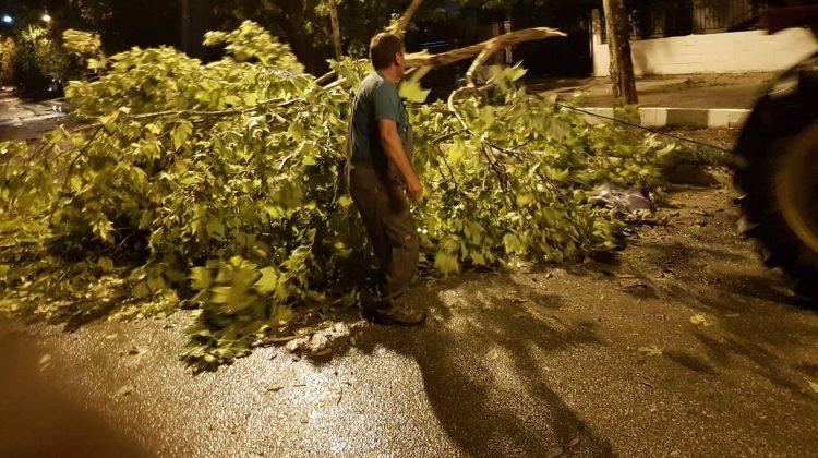 Δυνατή βροχή και άνεμοι σάρωσαν στην Φαρκαδόνα (φωτ.)