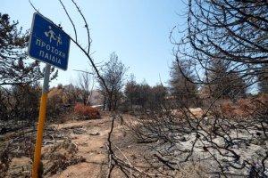 Δάση, πυρκαγιές: Ο φάκελος της υποκρισίας και οι λύσεις*