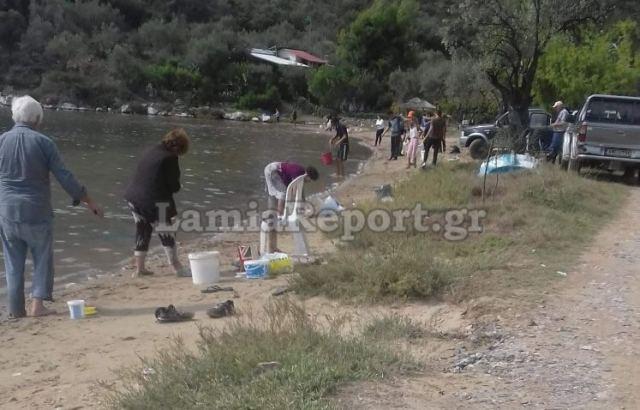 Φθιώτιδα: Γέμισε τσιπούρες η θάλασσα