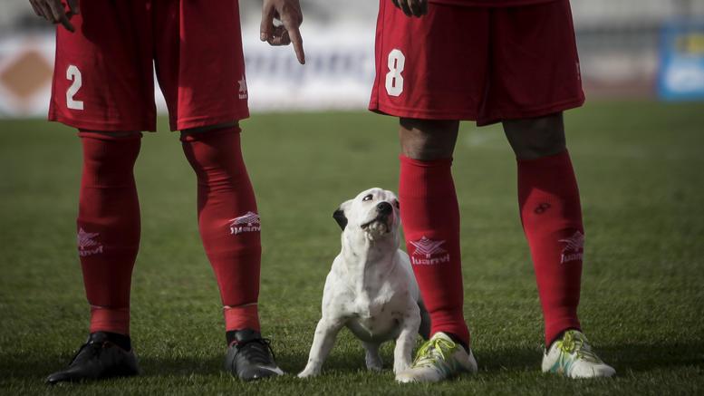 Ο σκύλος που έκλεψε καρδιές στο γήπεδο στα Τρίκαλα