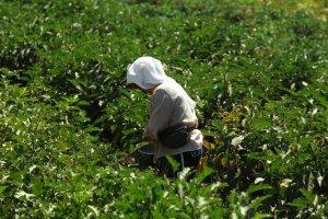Έρευνα: Το προφίλ της Ελληνίδας αγρότισσας