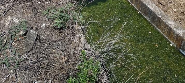 Δείγματα λαμβάνονται από «τοξικό» αρδευτικό κανάλι στη Φαλάνη Λάρισας