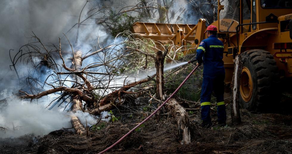 Στάχτη έγιναν 300 στρέμματα δασικής έκτασης στο Δίλοφο Φαρσάλων - Υπό μερικό έλεγχο η φωτιά