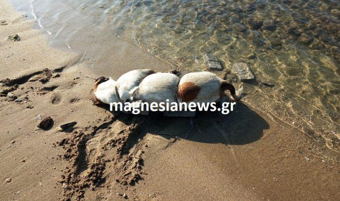 Φρίκη στο Βόλο: Έδεσε σκύλι με πέτρες και το πέταξε στη θάλασσα!