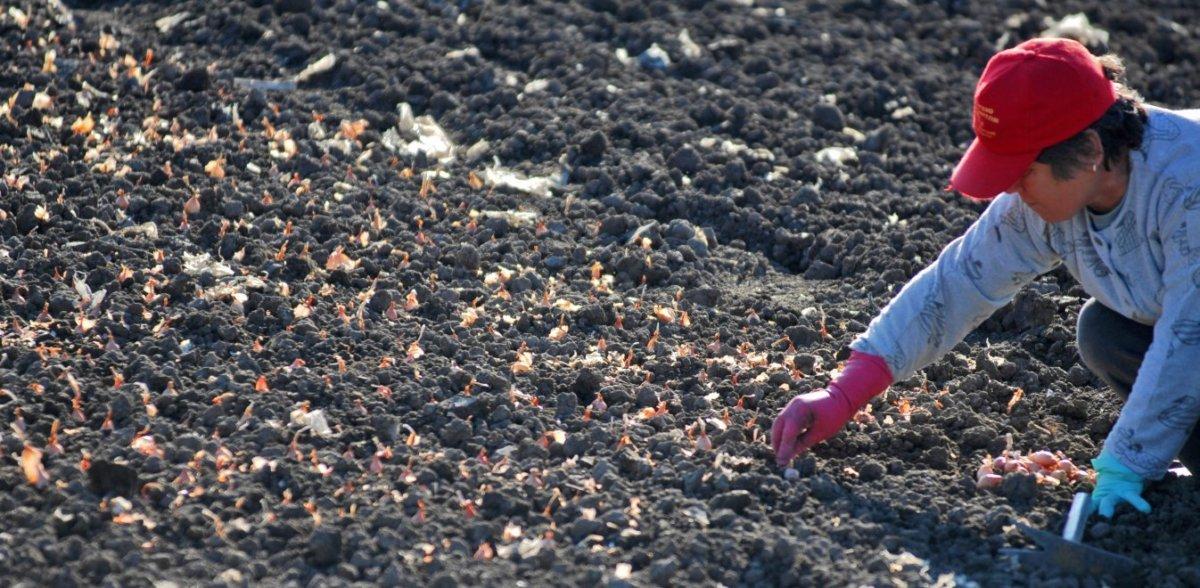 ΟΠΕΚΑ: Πότε καταβάλλεται το βοήθημα σε πολύτεκνες αγρότισσες