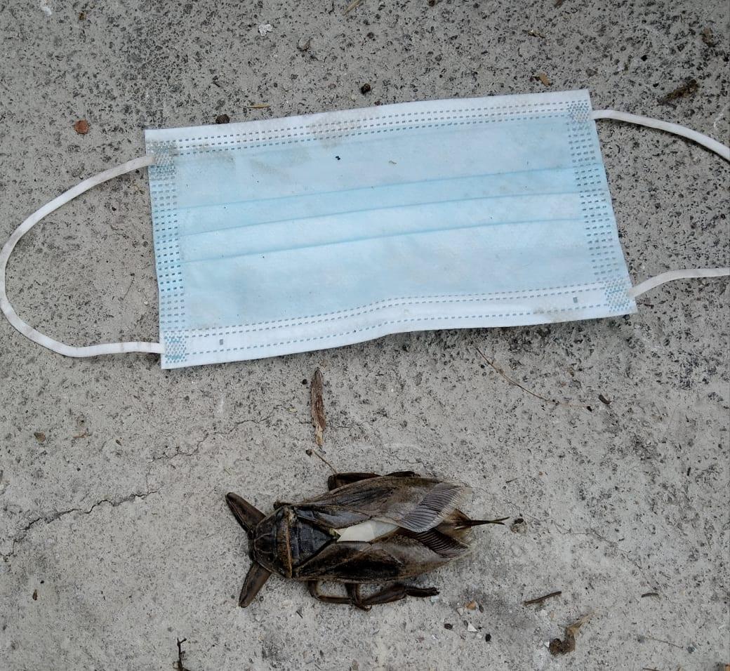 Τρόμος στην Ελλάδα απο το σαρκοφάγο εντόμο-Ο γιγάντιος και δηλητηριώδης Λιθόκερος εμφανίστηκε στην Λάρισα